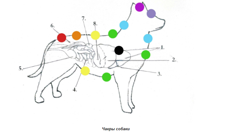 Расположение чакр у собаки